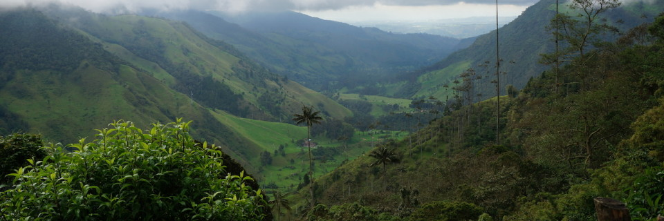 Hiking Valle Del Cocora
